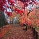 秋の思い出(781回)