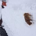 連日の雪!(795回)